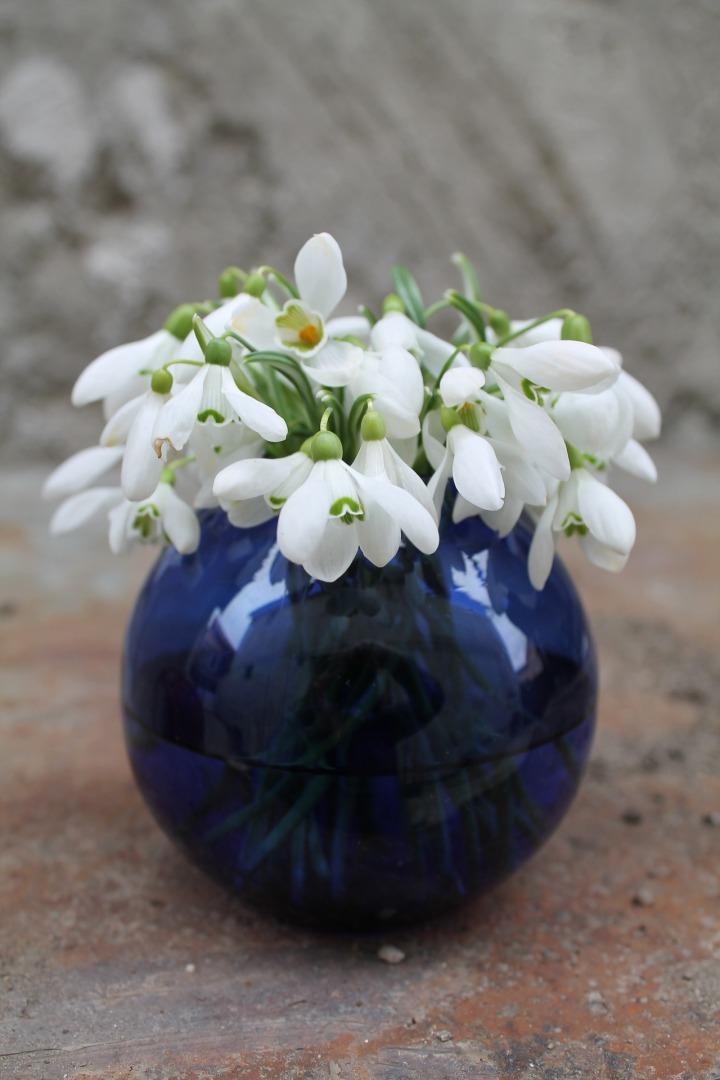 flowers-1502658_1920